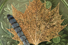 Lace maple leaf with bluebird feather Stock Photography