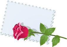 Lace napkin and rose Royalty Free Stock Photo