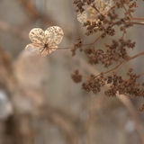 Lace remains Royalty Free Stock Images