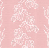 Lace floral seamless pattern Royalty Free Stock Images
