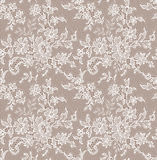 Lace Seamless Pattern. Royalty Free Stock Photos