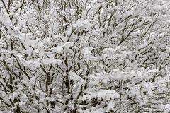 Lace texture of snow on tree branches  in countryside near Horge Royalty Free Stock Image