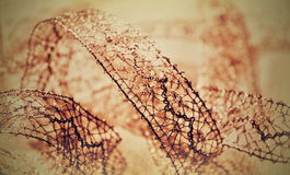Lace ribbon. Silver laced ribbon on the bright background Stock Photography