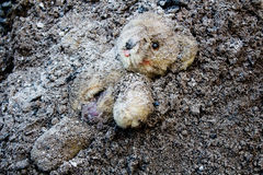 Lacerated And Abandoned Teddy Bear Royalty Free Stock Photography