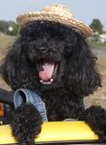 Lachender Hund Stockfotos