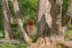 Lachlan Carving en la madera de lachlan en la hada Glen By Troon Scotland de Fullarton imagenes de archivo