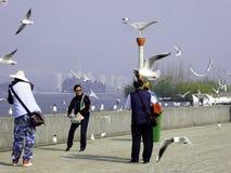 Lachmöwefliegen Lizenzfreie Stockfotografie