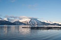 Lachsbauernhöfe in Norwegen Stockbilder