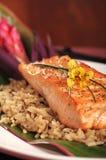 Lachse auf Reis Lizenzfreies Stockfoto