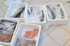 Lachse und andere Fische im Plastikkasten auf einem Boden in Fischmarkt-Antalya-Truthahn Stockfotos