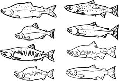 Lachsfische Lizenzfreies Stockbild