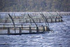 Lachslandwirtschaft Stockfotos