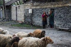 Lacht bejaarde plattelandsvrouw twee Een troep van schapen loopt langs een landelijke weg stock foto's