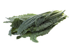 Lacinato kale Royalty Free Stock Photos