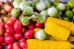 Laciniatum, tomate, maïs et pomme de terre de solanum image stock