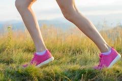 lack-läufer Stockbild