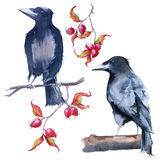 Lack Raven. Isolated on white background. Watercolor illustration Stock Photo