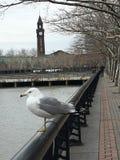 Lackawanna Seagull royaltyfri fotografi