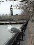 Lackawanna Seagull. New Jersey train station royalty free stock photography