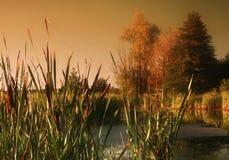 Lacke des Herbstes Stockbild