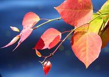 Lacke des Herbstes Lizenzfreies Stockbild