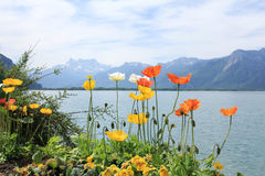 Lacke en bergen met bloemen in zonnige dag Stock Afbeeldingen