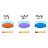 Lackmusflüssigkeit und Lackmuspapier prüfen in den Lösungen mit säurehaltigem, alkalischem und neutralem pH Lizenzfreie Stockfotos