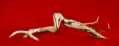 Laconic still life - driftwood on red paper background Stock Photos