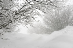 Laconic winter landscape, snow drifts and branches Stock Photography