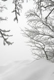 Laconic winter landscape, snow drifts and branches. Well suited as background Stock Image