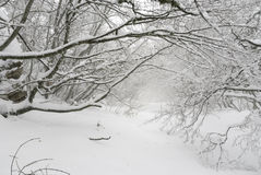 Laconic winter landscape, snow drifts and branches Stock Images