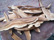 Lacquered dried Dried lingzhi mushroom stock images