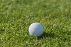 Lacrosse-Ball Lizenzfreies Stockbild
