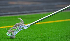 Lacrosse stick coming down on a ball. Boys High School Lacrosse stick coming down on a ball on a turf field royalty free stock images