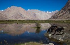 Lacs de l'Himalaya dans le lah Photographie stock