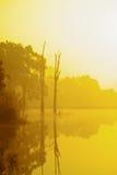 Lacs et arbres Photo libre de droits