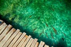 Lacs Plitvice de poissons Image libre de droits