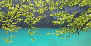 Lacs Plitvice Jezera, Croatie par des arbres Images stock