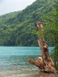 Lacs Plitvicke Image libre de droits