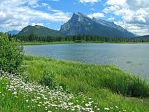 Lacs vermeils avec des marguerites photo stock