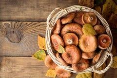 Lactarius Deliciosus, conhecido geralmente como o cogumelo do tampão do leite do açafrão e do pinho vermelho na cesta de vime em  Foto de Stock