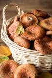 Lactarius Deliciosus, conhecido geralmente como o cogumelo do tampão do leite do açafrão e do pinho vermelho na cesta de vime em  Foto de Stock Royalty Free