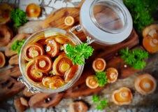 Lactarius posto de conserva dos cogumelos em um frasco de vidro Foto de Stock Royalty Free