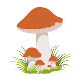 Lactarius quietus, edible forest mushrooms. Colorful cartoon illustration Royalty Free Stock Photo