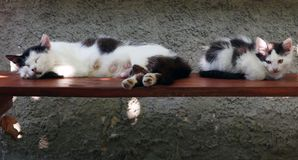 The lactating cat sleeps on the bench next to the kitten Royalty Free Stock Photo