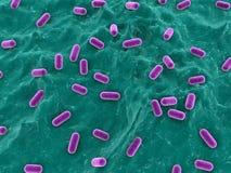 Lactobacille illustration de vecteur
