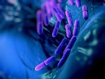 Lactobacillus bulgaricus bateria Royalty Free Stock Image