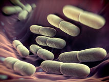 Lactobacillus-Bulgaricusbakterien Stockbilder