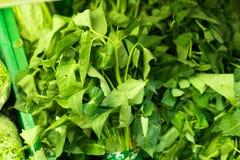 Lactuca nel mercato, gradi differenti, primo piano di estate, macrofotografia della lattuga Mercato dell'agricoltore su Bali, ali Fotografia Stock
