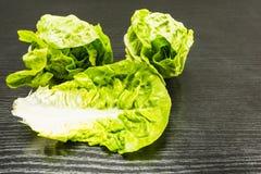 Lactuca sativa l салата Romaine Стоковые Фото